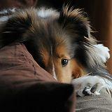 This is Leo. - Imgur