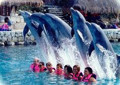 i wanna do this so badly....swim with my fav animal