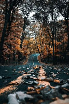 trees and road in fall