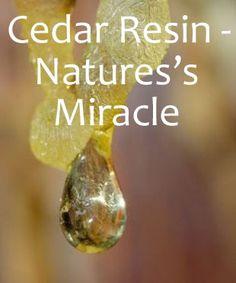 Cedar Resin: Nature's Miracle