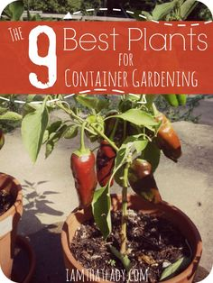 Are you wanting to learn how to garden but don't have enough space?  Container Gardening is a great way to grow your own food without creating a huge garden. Here are the 9 best plants to grown in container gardens, and how to get them started!