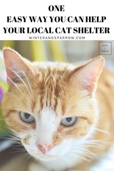 One Easy Way You Can Help Your Local Cat Shelter Cats Shelter Dog Safety