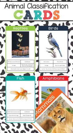 These Animal Classification Cards are an awesome resource for kids! With a beautiful image, along with what features the animal has that places them in their specific classification. Some even have awesome / fun facts!
