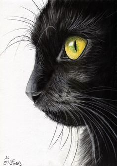 Pencil Portrait Mastery - Black Cat Portrait Charcoal drawing - Discover The Sec. - Pencil Portrait Mastery – Black Cat Portrait Charcoal drawing – Discover The Secrets Of Drawing - Black Cat Drawing, Black Cat Painting, Painting Art, Cat Paintings, Realistic Cat Drawing, Realistic Drawings Of Animals, Easy Cat Drawing, Kitty Drawing, Pencil Drawings Of Animals