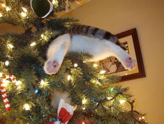 cats liking Christmas trees