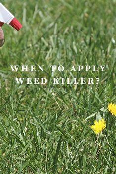 Best Dandelion Killers For Your Lawn Dandelion Get Rid Of