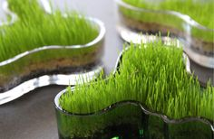 Easter grass in Aalto vases Spring Decoration, Decoration Table, Beautiful Home Gardens, Easter Season, Easter Traditions, Spring Party, Spring Is Here, Egg Hunt, Easter Wreaths