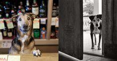 Heartwarming Portraits of Senior Dogs Pay Tribute to Aging Pets https://plus.google.com/+KevinGreenFixedOpsGenius/posts/4s7MYrq7P2W