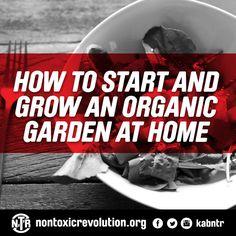 Organic garden at home Organic Gardening, Gardening Tips, We Energies, Natural Garden, Living A Healthy Life, Green Garden, Eating Well, Home And Garden, Plants