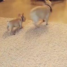Butt boops via Classy Bro