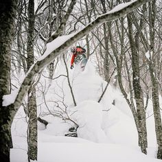 Romain De Marchi aka: @rdmyes ripping through some tight trees while filming in Japan. Photo: @chadchomlack #WildcatWednesdays