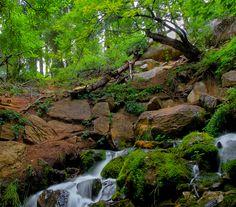 Horton Springs, Payson, Az by VaIerie, via Flickr