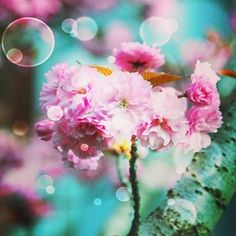 spring,flower,floral,꽃,봄,분홍,pink