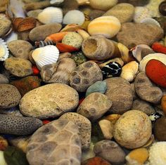 Beautiful Petoskey stones.......Google Image Result for images.fineartame...