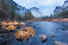Alone in a Park, Yosemite National Park, by Jared Ropelato, via Flickr