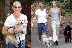 Ellen DeGeneres, Portia de Rossi Walking Their Dogs in LA