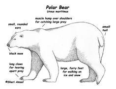 a8ac4d0f77474db867b0d2c167e5f1c8 oso polar polar bears 62 best polar bear polar bear what do you see images bears, winter