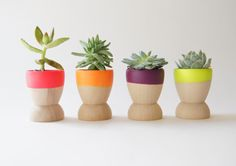 succulents in egg cups - Easter table deco