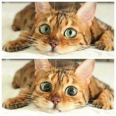 those cat eyes