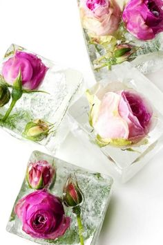 To make these feminine floral cubes, opt for chemical-free edible flowers like rose, lavender + elderflower.
