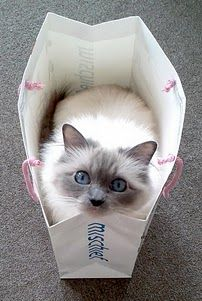 I have a picture of one of my cats taken years ago, looking up from a sack just like this one.