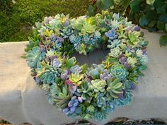 Succulent Heart Wreath - by tobieanne Etsy Succulent Centerpieces, Succulent Wreath, Succulent Cuttings, Cacti And Succulents, Planting Succulents, Deco Cactus, Valentine Day Wreaths, Valentine Heart, Valentines