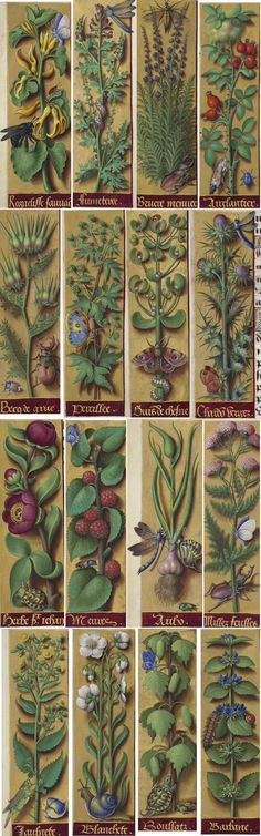 Date d'édition : 1505-1510 Type : manuscrit Langue : latin Horae ad usum Romanum, dites Grandes Heures d'Anne de Bretagne