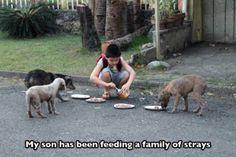 Mi hijo ha estado alimentando una gran familia de perros callejeros