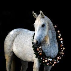 Christmas Horses, Christmas Animals, Xmas Photos, Christmas Pictures, Horse Photos, Horse Pictures, Animals And Pets, Cute Animals, Equine Photography