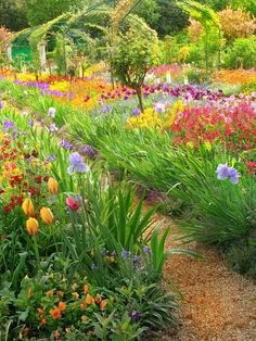 Claude Monet's garden in Giverny France