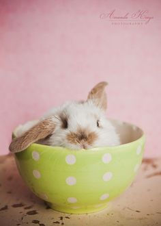 Bunny in a polka dot teacup wins all the things.