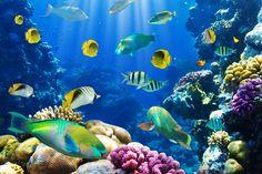 Produtos Oceanic  Os produtos de origem marinha começaram a ser explorados de forma sistemática há menos de 50 anos. Enquanto no Brasil a química dos produtos naturais é fortemente direcionada para plantas, nos Estados Unidos e Europa os ativos marinhos já eram…