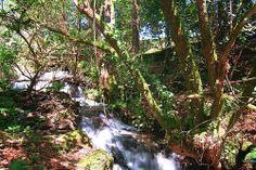 Polo río abaixo en Vedra