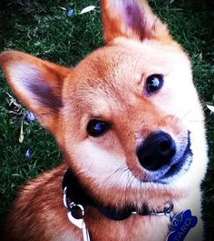 Why Do Dogs Tilt Their Heads When We Talk to Them? - Neatorama