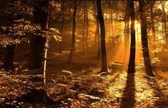 herfst, bos, bomen, zon, zonlicht, stralen, afgelegen, rustige, natuur wallpaper