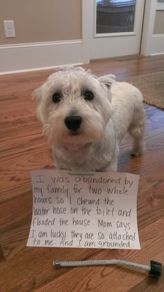 I was abandoned by my family for two whole hours so I chewed the water hose on the toilet and flooded the house. Mom says I am lucky they are so attached to me. And I am grounded. | http://dog-shame.com/