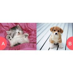 Kittens or puppys Click here to vote @ http://getwishboneapp.com/share/4092130