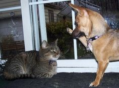 A dog trying to get a high five from a cat