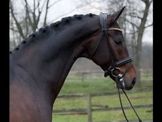 www.sporthorses-online.com 2006 Grand Prix prospect for sale