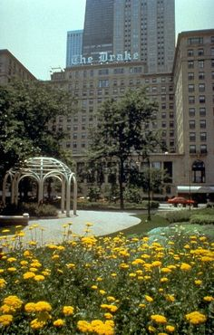 The Drake Hotel, Chicago - staying there in May. Hope it is as nice as The Palmer House!