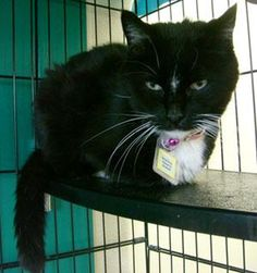 Rescue Shelters For Cats In Colorado Springs