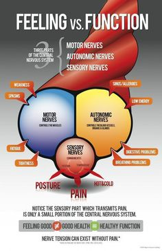feeling vs function. You can have subluxation without having pain. Sensory nerves (nerves that feel pain) make up only 6% of your nerves. The remaining 94% of your nerves don't feel pain, they deal with body function. Moral: Just because you don't hurt, doesn't mean you don't need a chiropractor.