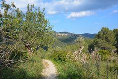 Ontsnap aan die koude Nederlandse winter en ga Wandelen op Mallorca. Een goede start van het voorjaar met het Mallorca Walking Event.