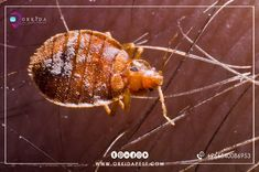 Pest Control Services, Animals, Animales, Animaux, Animal, Animais