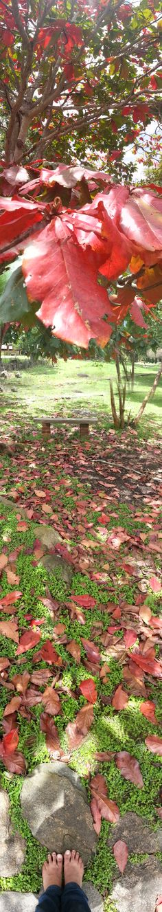 at Jungle Hut. Masinagudi.