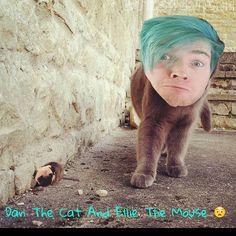 Dan The Cat And Ellie The Mouse Tag Them! @elliedarciepugs @dantdm #dantdm #teamtdm #pugs #pugsofinstagram #lol #tomandjerry #edits by edits4dantdm