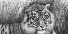40 Beautiful and Realistic Animal Sketches For Your Inspiration.