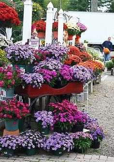 Want to know the best flowers for fall gardens?