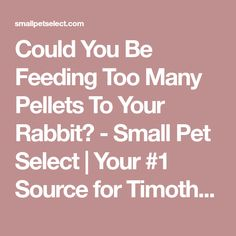 Could You Be Feeding Too Many Pellets To Your Rabbit? - Small Pet Select | Your #1 Source for Timothy Hay