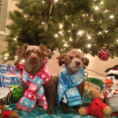 Sophie and Chauncey Christmas 2014